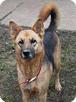 German Shepherd Dog Mix Dog for adoption in Shreveport, Louisiana - Phoebe