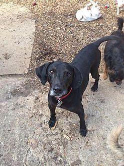 Plott Hound Mix Dog for adoption in Acworth, Georgia - Bosco
