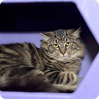 Adopt A Pet :: Gretel - Medina, OH