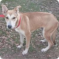 Adopt A Pet :: Buddy - East Hartford, CT