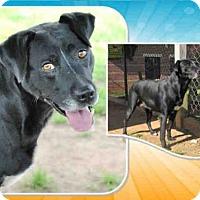 Labrador Retriever Mix Dog for adoption in Grovetown, Georgia - A079038