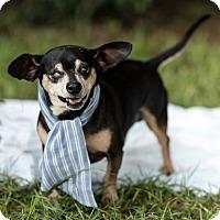 Adopt A Pet :: Holland - Fort Valley, GA