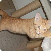 Adopt A Pet :: Louis - Lacon, IL