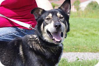 Husky Mix Dog for adoption in Elyria, Ohio - Smokey