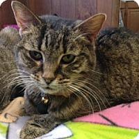 Adopt A Pet :: Taffy - Cleveland, OH