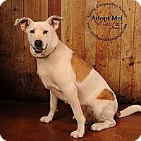 Adopt A Pet :: Burt - Salem, NH