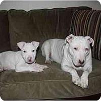 Adopt A Pet :: Wilbur - Reisterstown, MD