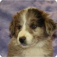 Adopt A Pet :: Birch - Broomfield, CO