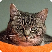 Adopt A Pet :: Candie - Calgary, AB
