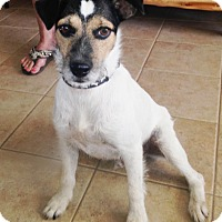 Adopt A Pet :: Wally in San Antonio - San Antonio, TX