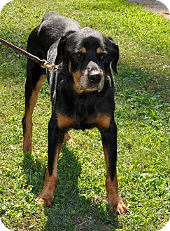 Rottweiler Mix Dog for adoption in Norwood, Georgia - Daisy