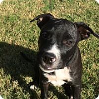 Adopt A Pet :: CAMPBELL - Nashville, TN