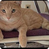 Adopt A Pet :: Morris - Gilbert, AZ