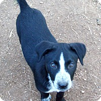 Adopt A Pet :: Blaze - Waller, TX