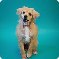 Adopt A Pet :: *Grandma Mae Kibble - Pittsburg, CA