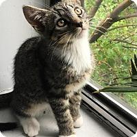 Adopt A Pet :: Goober - Brooklyn, NY