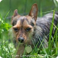 Adopt A Pet :: Didi - Bradenton, FL