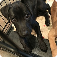 Adopt A Pet :: Lakely - Knoxville, TN