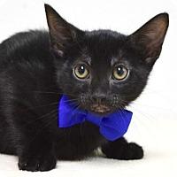Adopt A Pet :: Abe - Dublin, CA