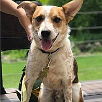Adopt A Pet :: Caesar - Racine, WI