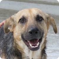 Adopt A Pet :: Kip!  Swimmer! - St Petersburg, FL