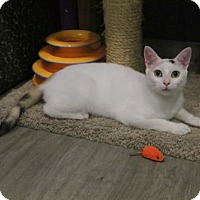 Adopt A Pet :: Snow (& Rosie) - Herndon, VA