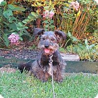Adopt A Pet :: SCOOTER - Bedminster, NJ