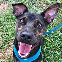 Adopt A Pet :: Dean - Richmond, BC