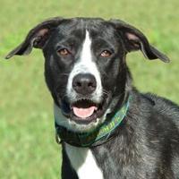 Adopt A Pet :: Rosie *Graduate* - Ashland, VA