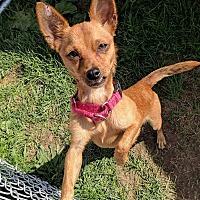 Adopt A Pet :: Barney - Lisbon, OH