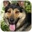 Photo 2 - German Shepherd Dog/Husky Mix Dog for adoption in Los Angeles, California - Billy von Haegele