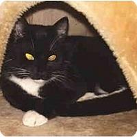 Adopt A Pet :: Joey - Dale City, VA