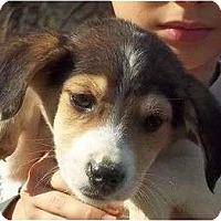 Adopt A Pet :: Dunken - Plainfield, CT