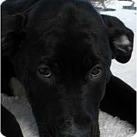 Adopt A Pet :: Cole - Rigaud, QC
