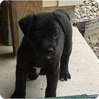 Adopt A Pet :: Cinder - Pointblank, TX