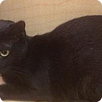 Adopt A Pet :: Sooty - Modesto, CA