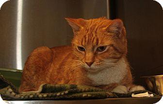 Domestic Shorthair Cat for adoption in Warwick, Rhode Island - Mandy