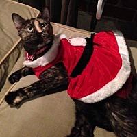 Adopt A Pet :: Emma Noel - Burbank, CA
