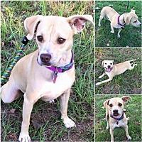 Adopt A Pet :: Honey - Lindale, TX