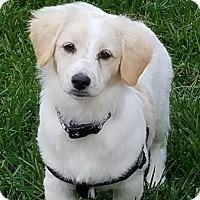Adopt A Pet :: Pecos Bill (pending adoption) - El Cajon, CA