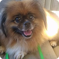 Adopt A Pet :: KingLouie - Davie, FL