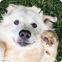 Adopt A Pet :: Kayla (Has Application) - Washington, DC