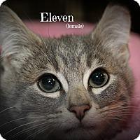 Adopt A Pet :: Eleven - Springfield, PA