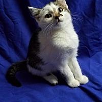 Adopt A Pet :: Inny - Winston-Salem, NC
