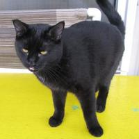 Adopt A Pet :: Pierre - New Iberia, LA