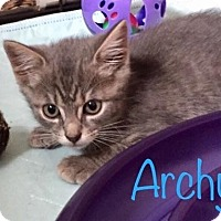 Adopt A Pet :: Archie - Flushing, NY