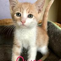 Adopt A Pet :: Owen - Riverside, CA