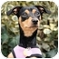 Photo 3 - Manchester Terrier Dog for adoption in Long Beach, New York - Roxy