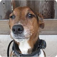 Adopt A Pet :: Max in Houston - Houston, TX