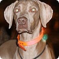 Adopt A Pet :: Hemi - St. Louis, MO